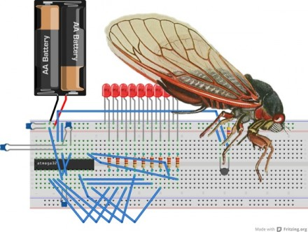 WNYC Cicada Tracker